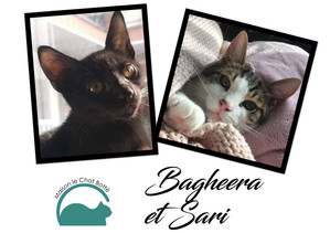 Bagheera et Sari