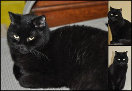 maison le chat botte - idor -.jpg