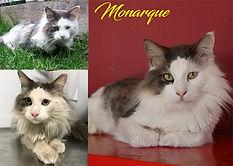 monarque.jpg