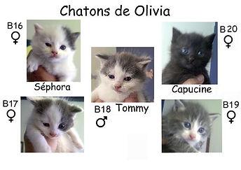 chatons Olivia.jpeg