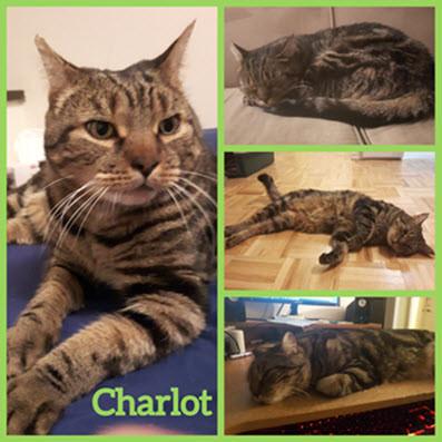 Charlot - 2 ans - Maison Le Chat Botté - Montréal