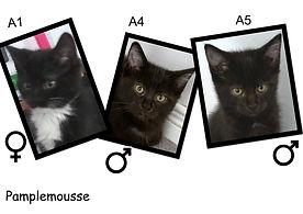 a4 a5.jpg