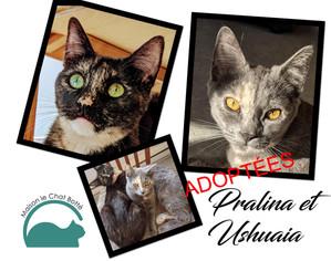 Pralina & Ushuaia