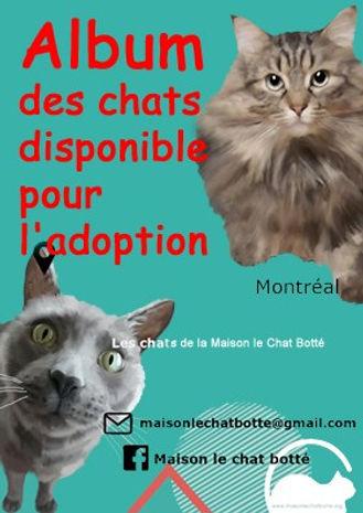 chats adoption.jpg