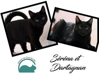 Séréna & Dartagnan