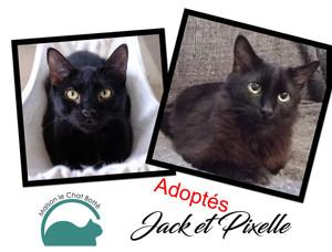 Jack & Pixelle
