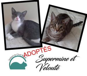 Supermine & Velouté