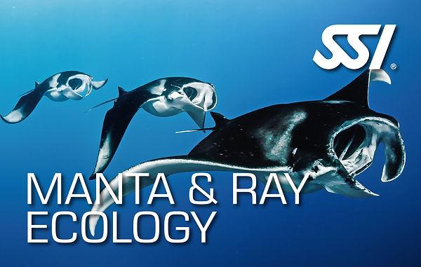 Manta  & Ray Ecology.jpg