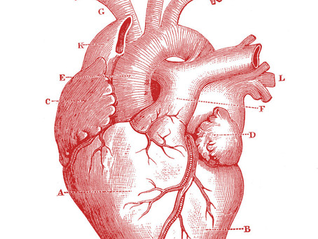 Cardio | Athlete's Heart
