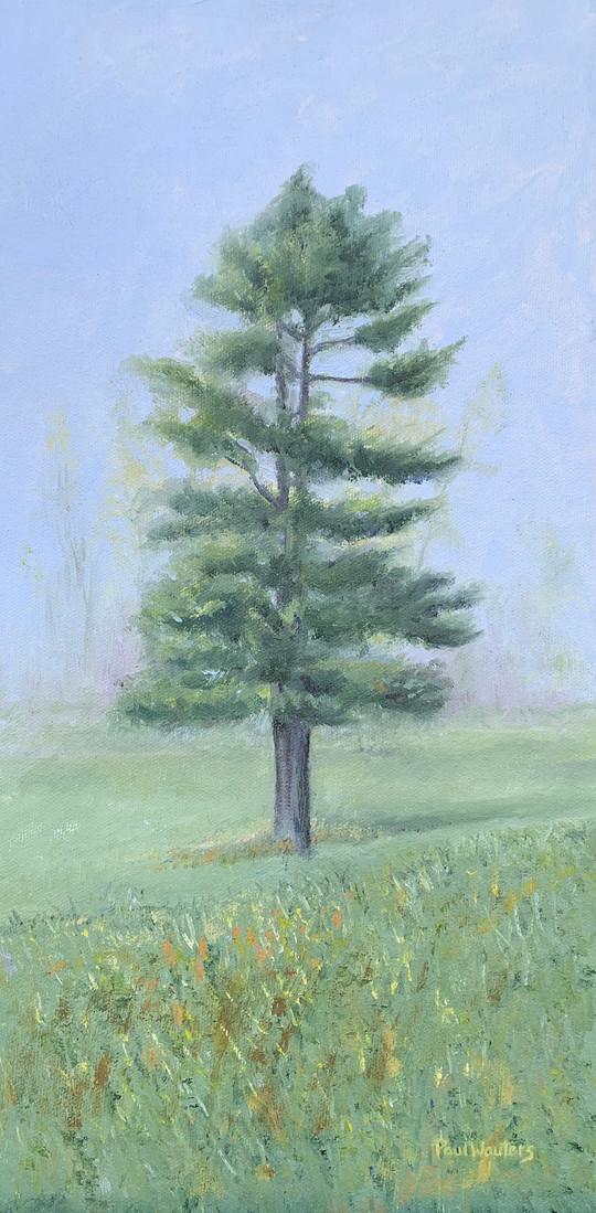 Pine Tree - Wisconsin