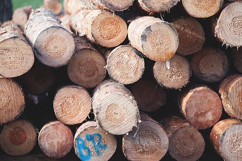 (2) Radiata Pine Log.jpg