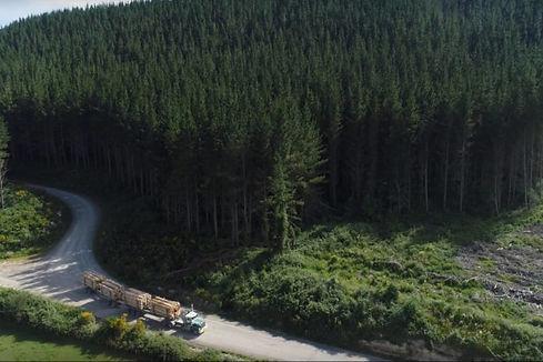 (1) Kaingaroa Forest.jpg