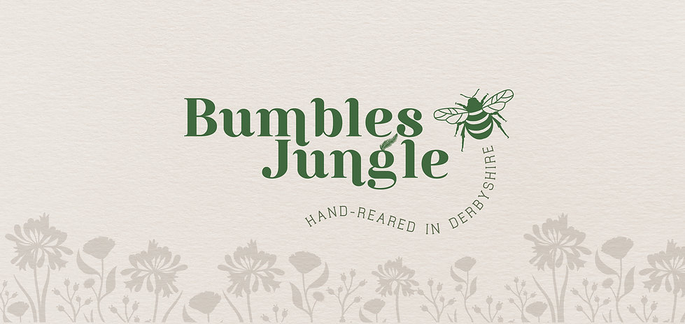 The Brand New Studio Bumbles Jungle Logo