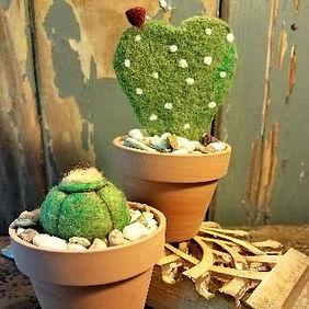 class-thumb-cacti.jpg