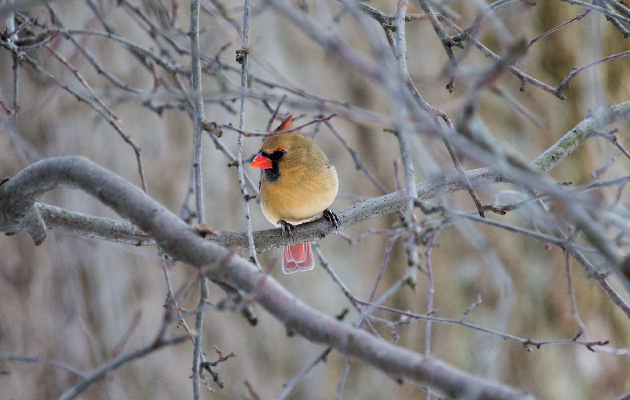 Birds+004.jpg