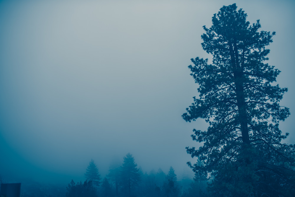 Fog, Trees, Forest, Wrightwood, California, Haunting