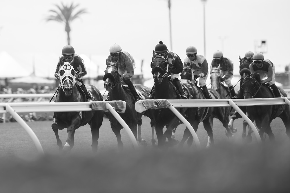 horses, racetrack, del mar, California, race horse, Photography