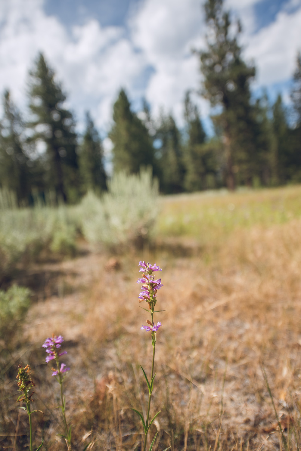 lake tahoe, flower, field, mountain, sun, moon, stars, lightening, nature, wilderness, fun, sun, stars, night photography, trees, California, landscape, sunrise, sunset, Nevada
