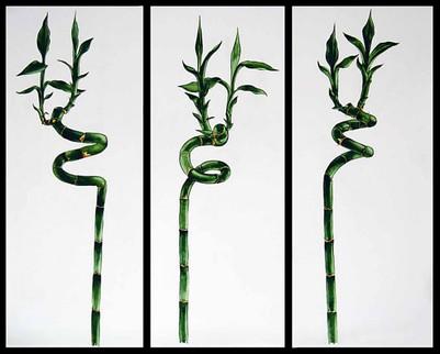Bamboo (triptich)