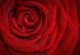 rose-1642970_1280.jpg