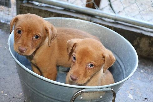 Puppy website 1.jpg