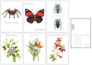 Cartes postales Deyrolle