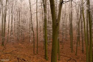 PhotoVogue_ToTheForestSheGoes.jpg