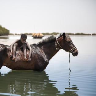 Le Delta du Saloum - L'enfant et son cheval