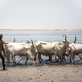 Le Delta du Saloum - La traversée #1
