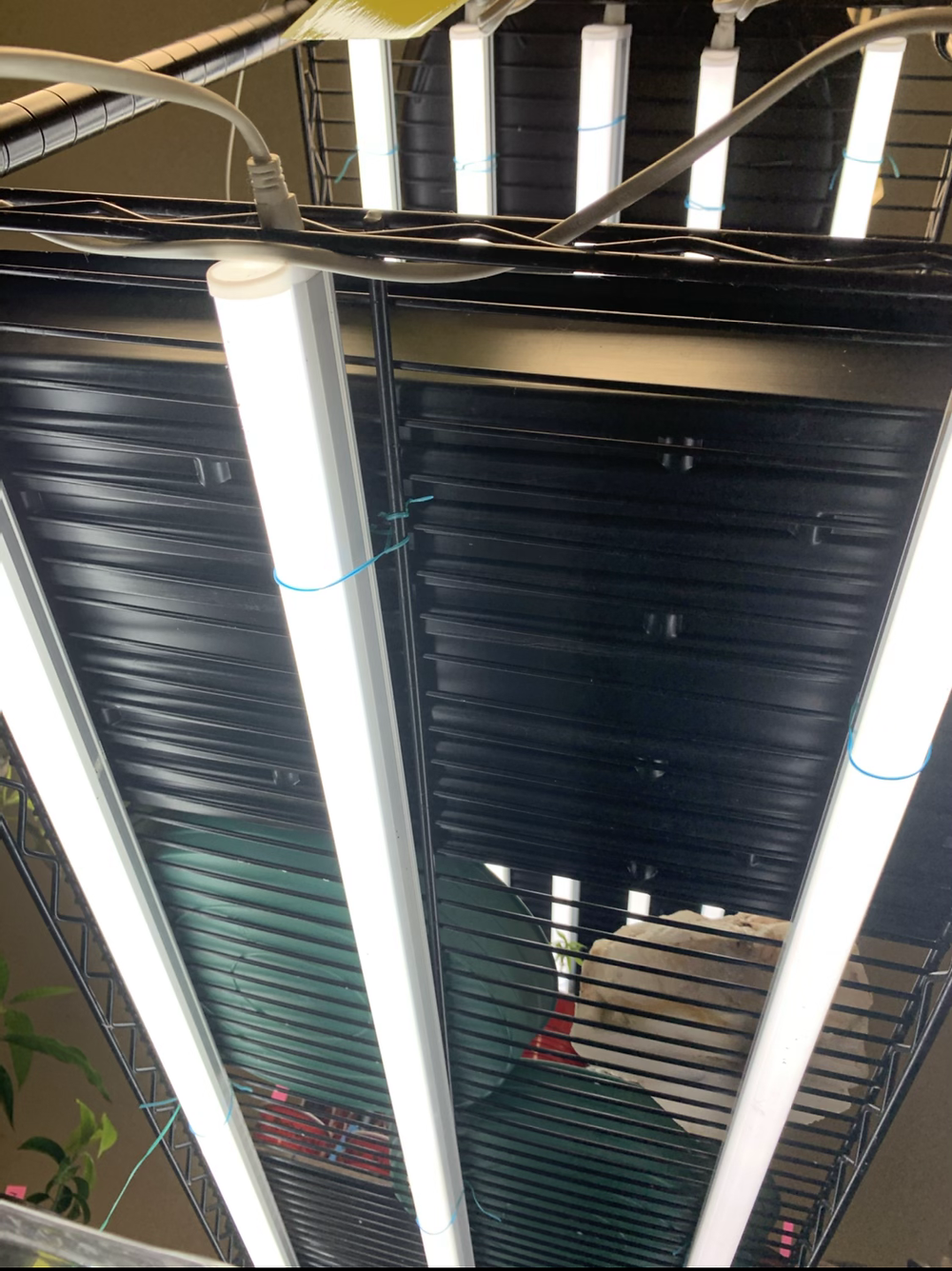 T5 Lighting is a cost efficient way to maintain your garden's starter plants!