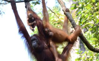 Borneo families.jpg