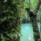 Jungle tour in Borneo