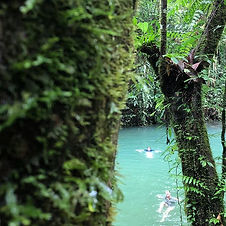 Jungle tour in Borneo