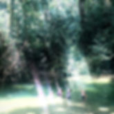 Jungle love.jpg