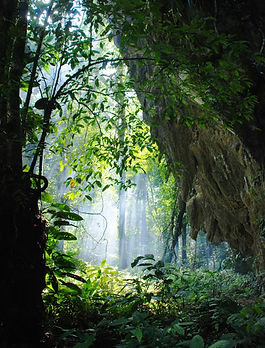 Mulu_forest_edited.jpg