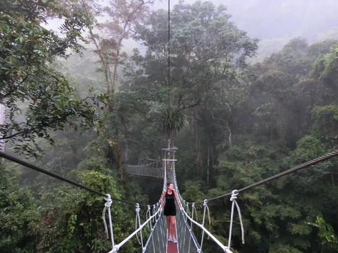 Canopy Skywalk Mulu National Park