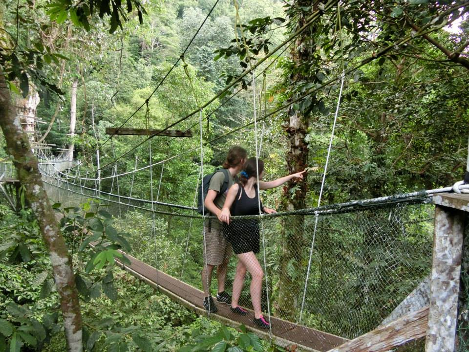 Canopy skywalk, Mulu National Park