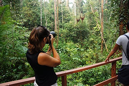 Borneo holiday adventure