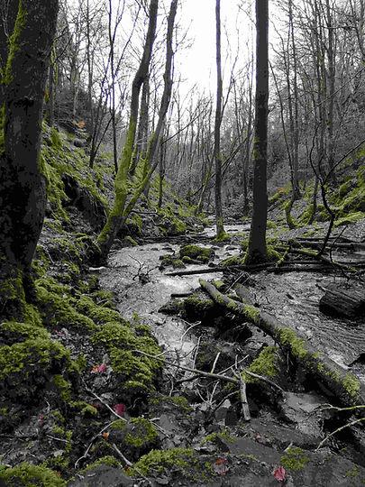 Compressed woodland-compressed.jpg