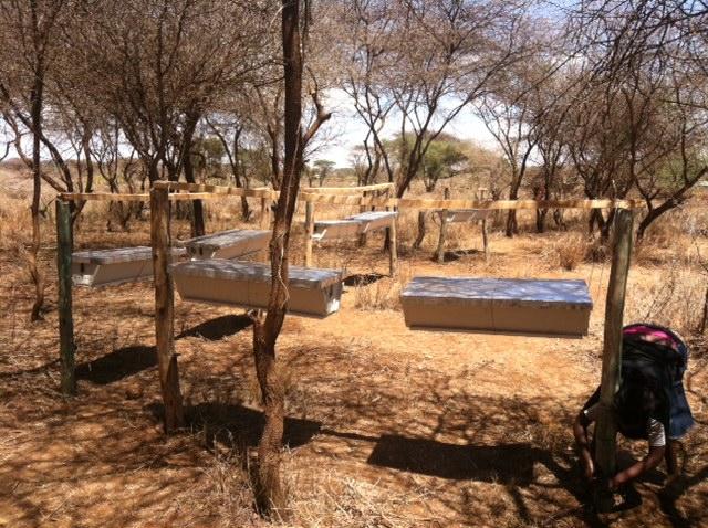 Apiary of 10 Kenyan Top Bar Hives