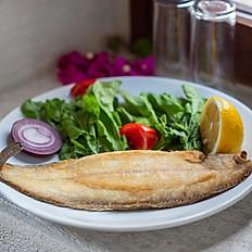 Dil Balığı