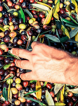 handselektierte Olivenöl