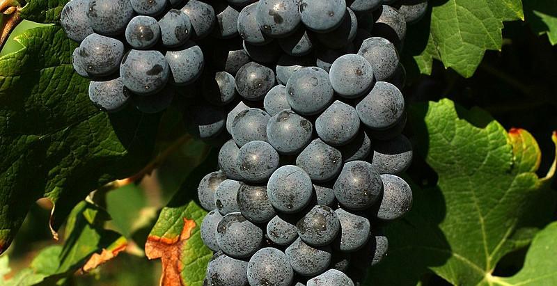 Warum italienischer Wein der beste ist?