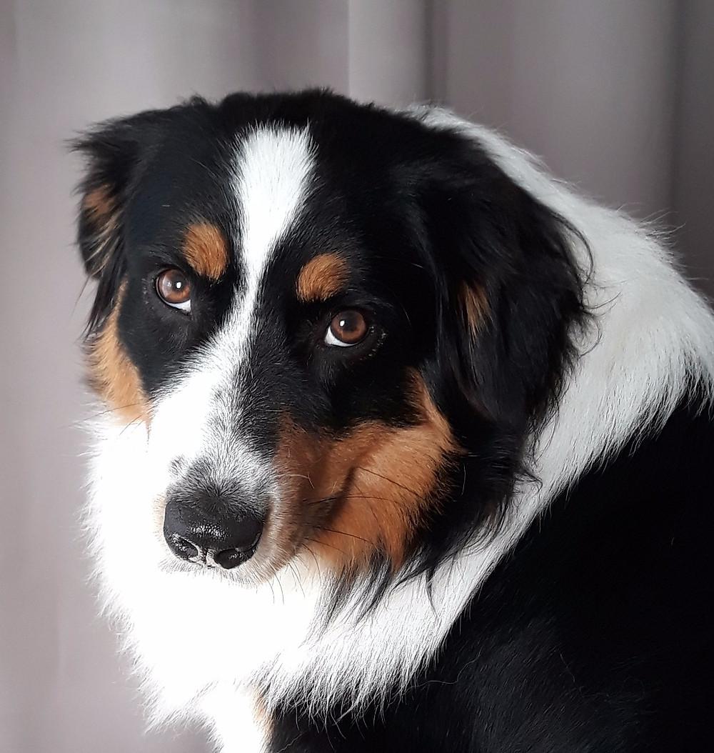 osteopathe pour chien Vannes Morbihan