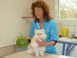 ostéopathe pour chat
