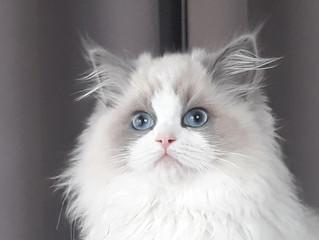 L'ostéopathie pour les chats...aussi