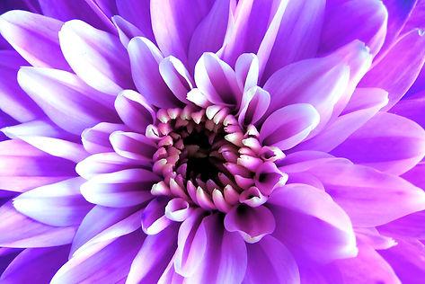 purple-1705122_1920.jpg