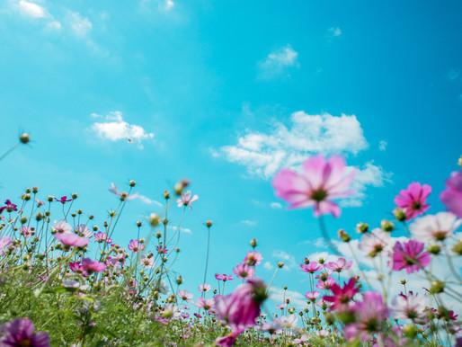13 NATURAL REMEDIES  FOR SEASONAL                            ALLERGIES