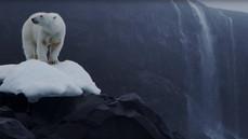 The Polar Bears of Franz Josef Land