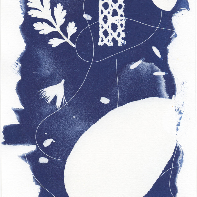 Cyanotype Collection